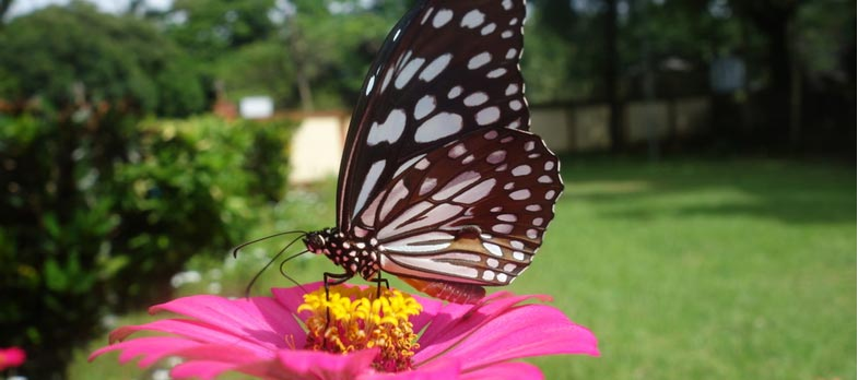 7 Ways You Can Attract Wildlife to Your Backyard