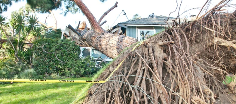 How Can You Tell if a Tree is Going to Fall Over? 4 Signs You Need Tree Removal Services