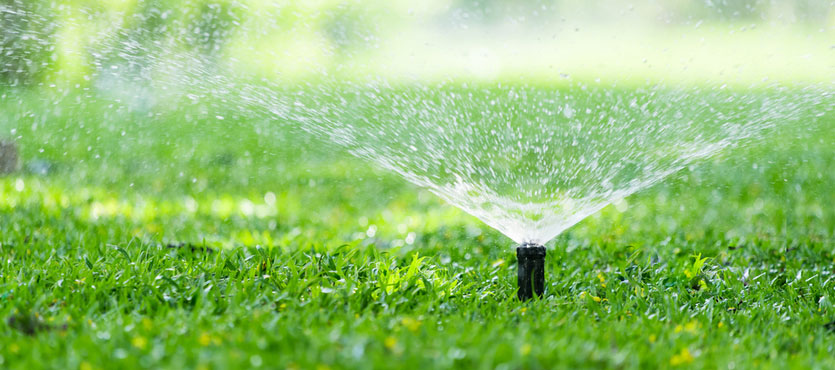 Your Lawn and Water Conservation