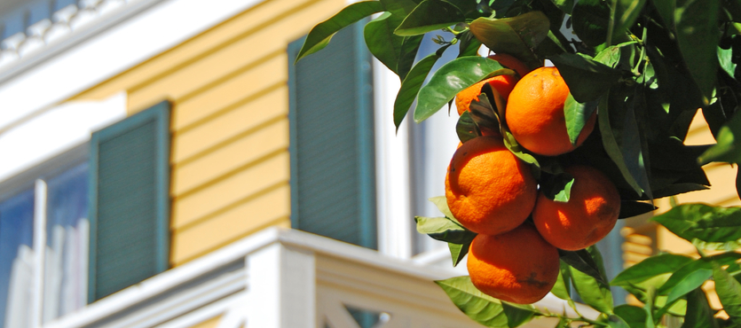 Best Fruit Trees for Your South Florida Garden