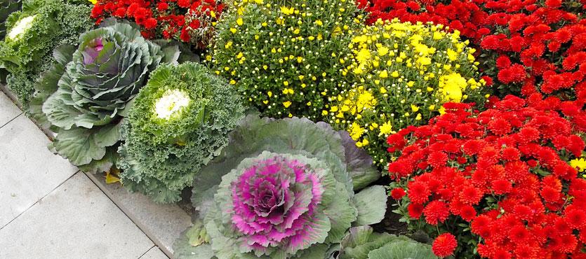 Incorporating Vegetables into Your Landscape Design