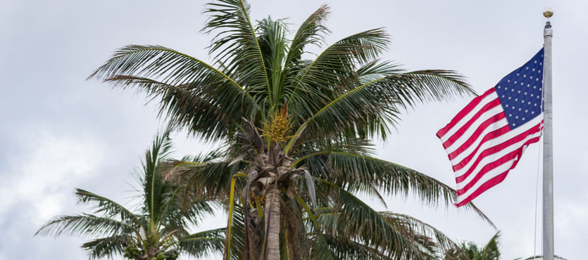 Taking Proper Care of Queen Palm Trees