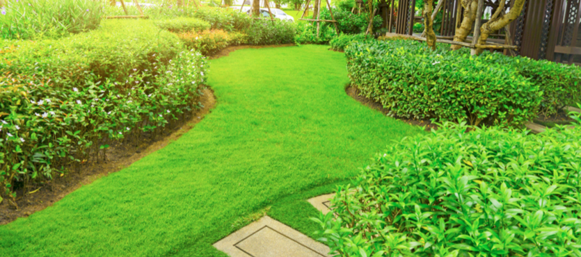 How to Properly Care for Zoysia Grass