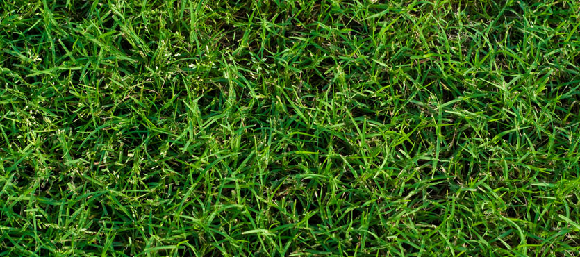 How to Care for Bermuda Grass